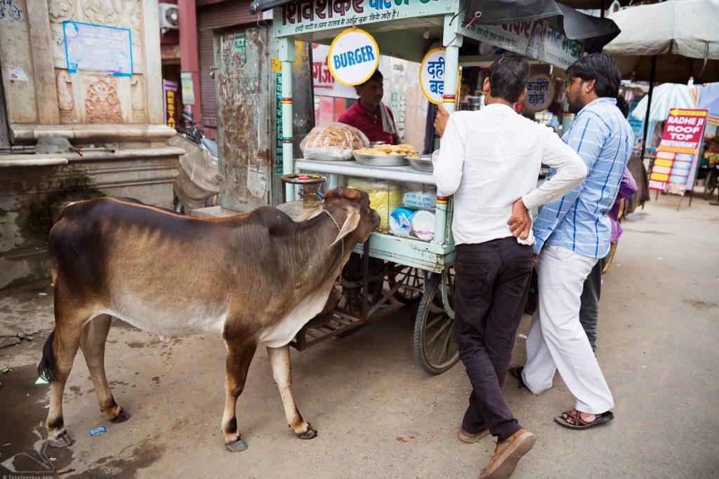 Fotokurs Fotoreise Nordindien Indien Rajasthan Fotografie fotografieren lernen Rajasthan Infoabend