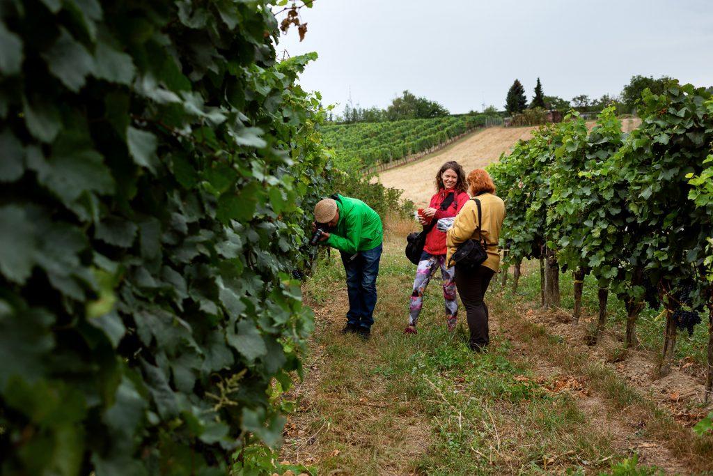 Beim Fotokurs Wein Natur und Genuss erwartet dich sehr gute fotografische Betreuung durch zwei Profis an deiner Seite und die kleine Gruppengröße.