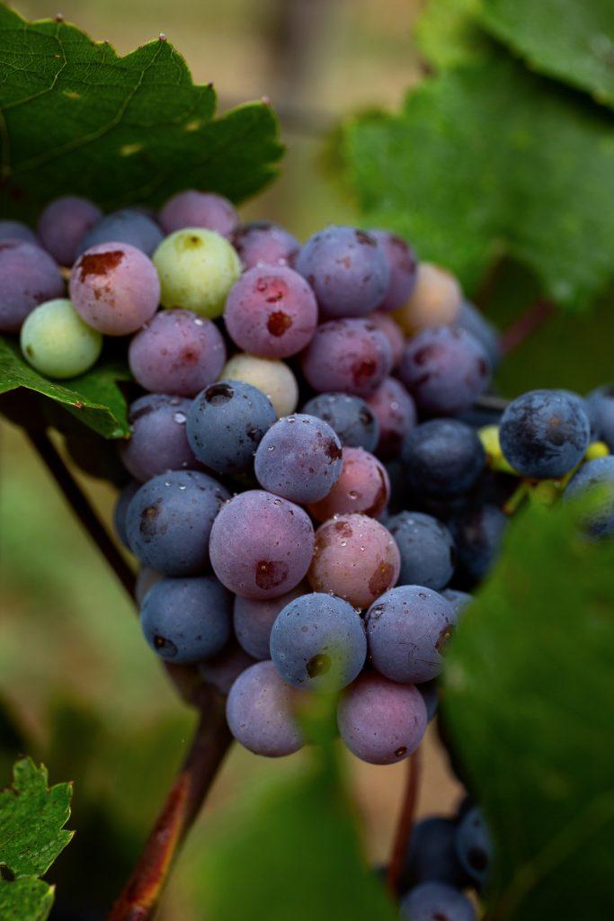 Lerne über die verschiedenen Weinsorten und deren Besonderheiten und setze sie mit vielen fotografischen Tricks in Szene.