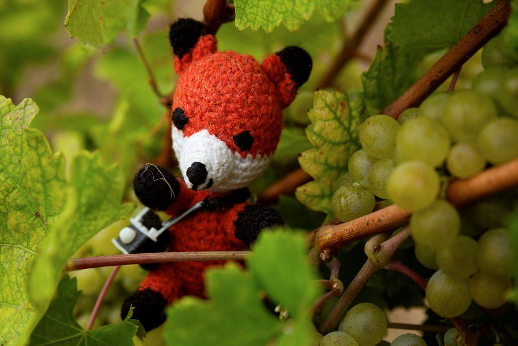 Bei unserem Fotokurs Wein Natur rund Genuss zeigt dir Finn viele Tipps und Tricks, wie du die Natur in den Weinbergen in Szene setzen kannst.