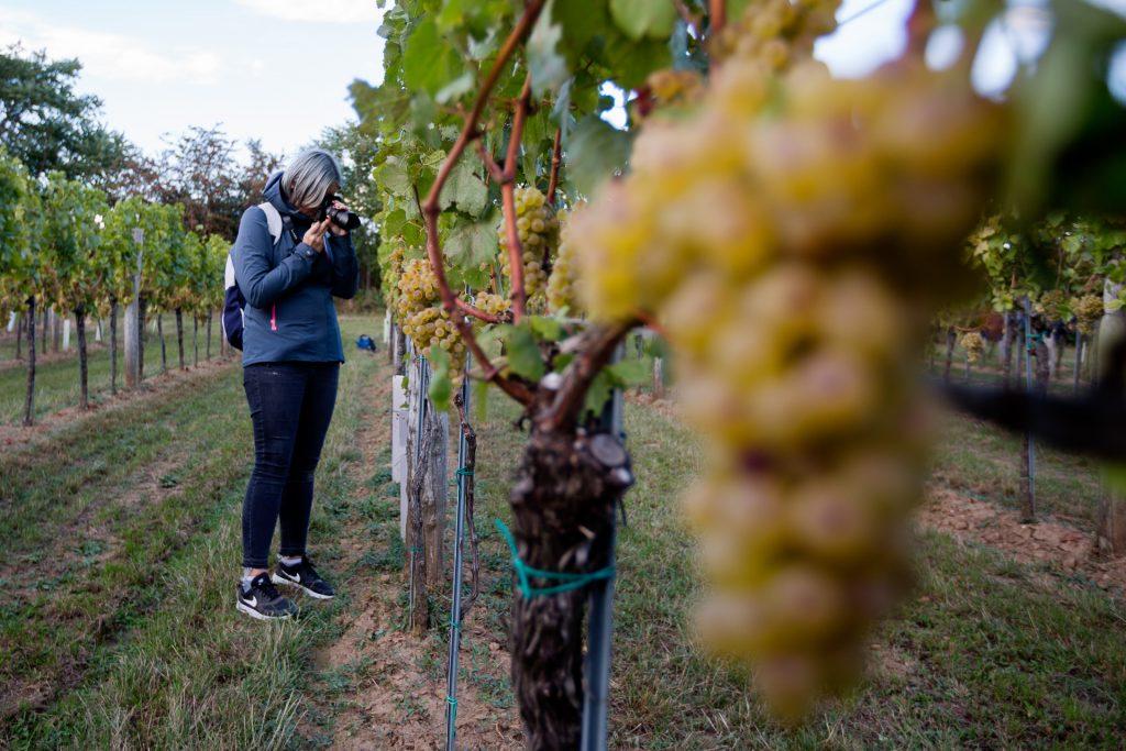 Komm mit uns auf einen exklusiven Fotokurs durch die Weinberge im Carnuntum und anschließender Weinverkostung.
