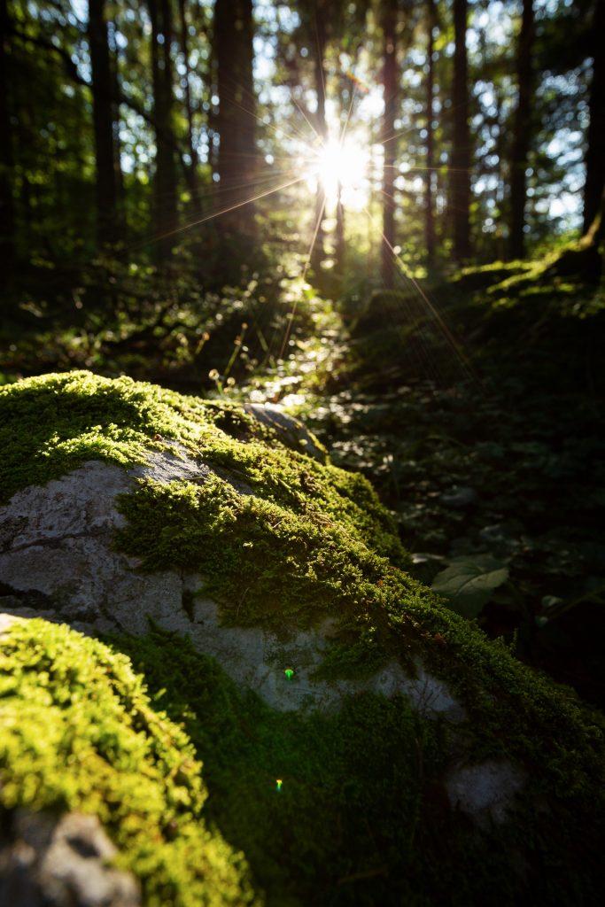 Bei unserem Aufstieg gehen wir im Wald auf Pirsch nach besonders ausgefuchsten Motiven im Morgenlicht.