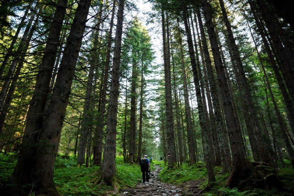 Gemeinsam streifen wir durch die Wälder hinauf zum Kanzler Moos, wo wir unsere erste Pause einlegen.