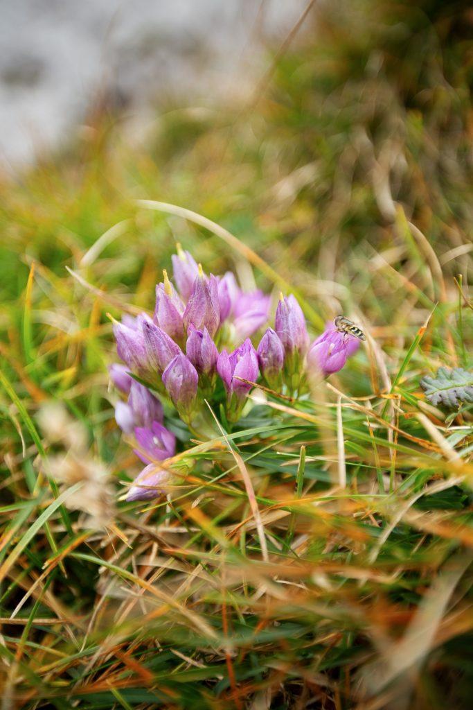 Der Schneeberg bietet eine vielfältige Flora und Fauna um dich mit Details zu spielen.