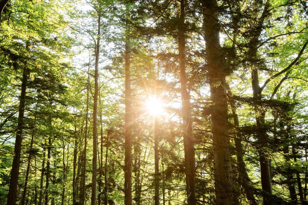 Gemeinsam bannen wir Lichteffekte im Wald auf Bild.