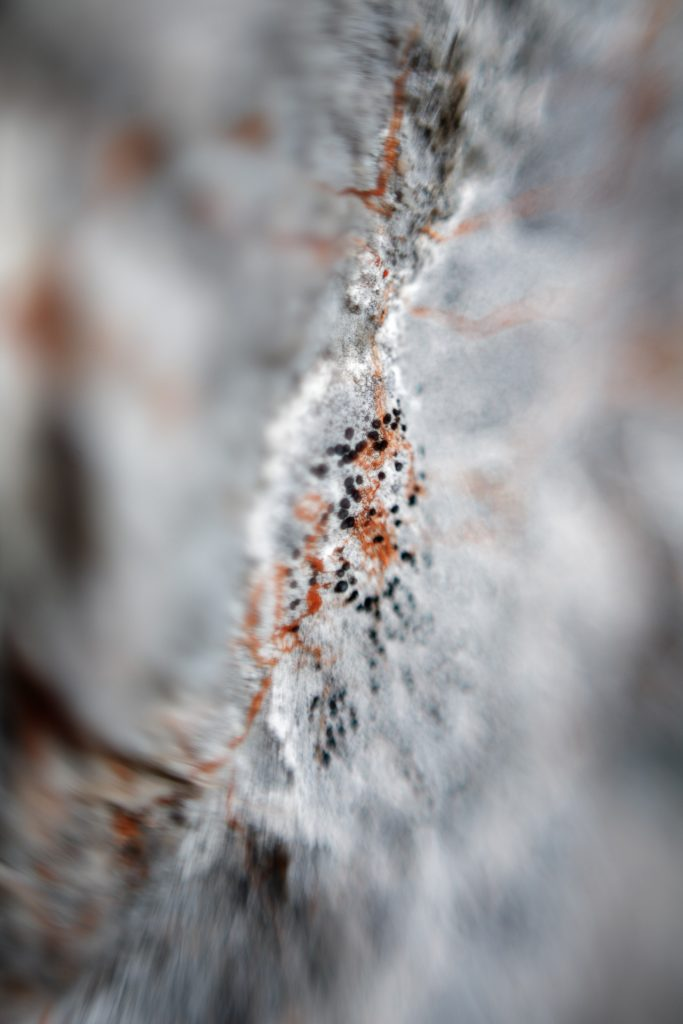 Du hast kein Makro Objektiv? Beim Wander-Fotokurs auf den Schneeberg verraten wir dir, wie du trotzdem ganz spezielle Makro Fotos erstellst.