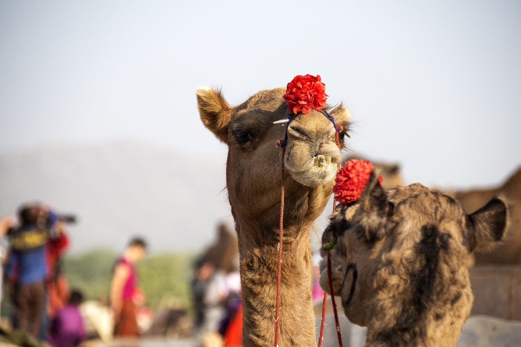 Fotokurs Fotoreise Indien Rajasthan Fotografie fotografieren lernen Rajasthan Infoabend FOR Messe
