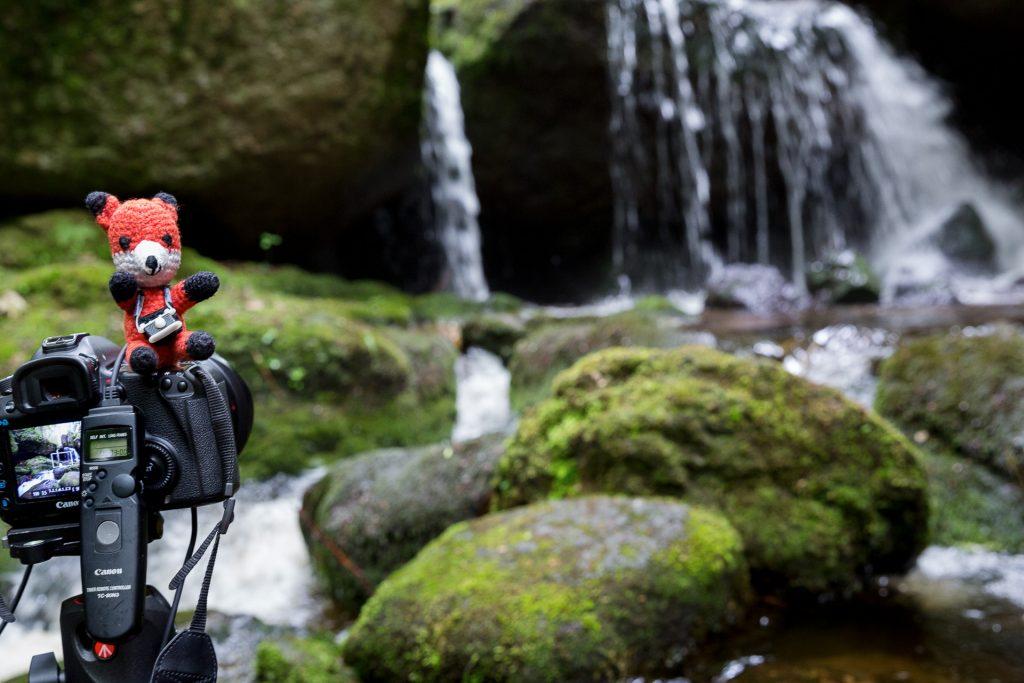 Beim Fotokurs Wildes Wasser - Wilder Wald in der Ysperklamm lernst du verschiedene Motive in der Naturfotografie auf Bild zu bannen.