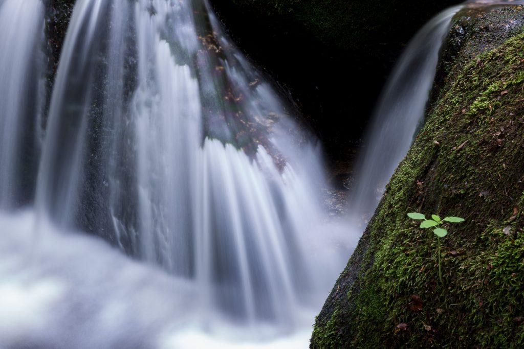 Ausgefuchste Details in der Naturfotografie. Auch als Ausschnitt lässt sich die Ysperklamm in Szene setzen.