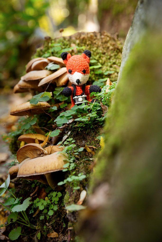 Gut gestärkt zeigt dir Finn bei unserem Fotokurs, wie du dich mit Perspektive in der Naturfotografie spielen kannst.