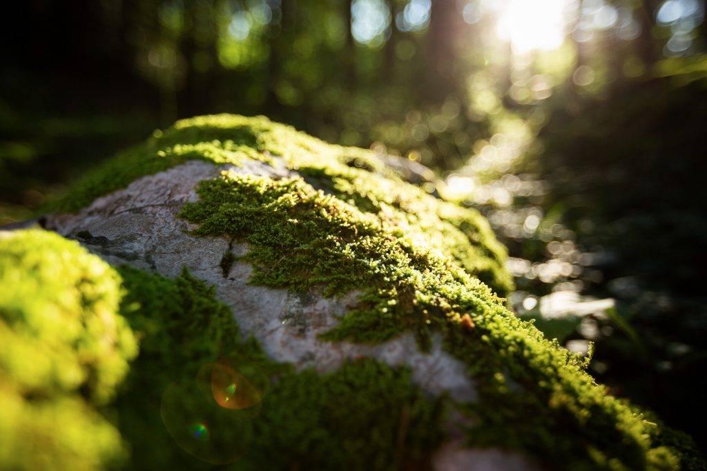 Bei unserem Fotokurs im Salzkammergut gehen wir im Wald auf Pirsch nach besonders ausgefuchsten Motiven.
