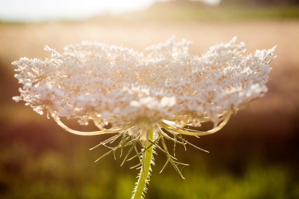 Auch Details in der Natur kannst du im Licht des Nachmittags besonders in Szene setzen.