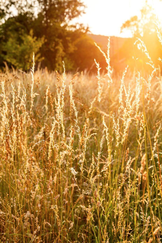 Spiele mit der tief stehenden Sonne. Lerne, wie du mit Gegenlicht ohne Filter Lichteffekte auf deine Fotos zauberst.