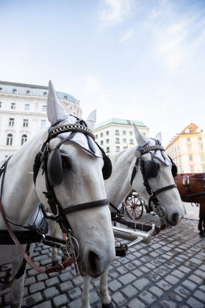 Bei unserem Fotokurs besuchen wir einige von Wiens beliebteste Sehenswürdigkeiten.