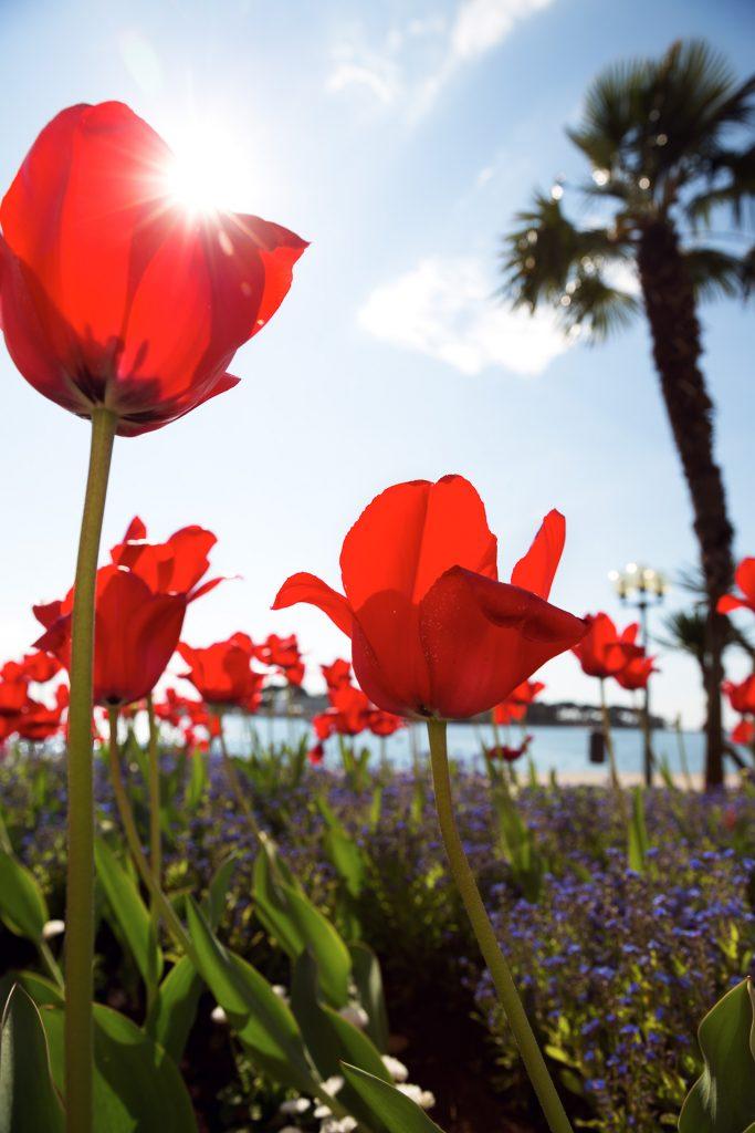 Spielereien mit Licht für deine Fotos kroatischen Adriaküste. Wir zeigen dir, wie du zu ausgefuchsten Reisefotos kommst.