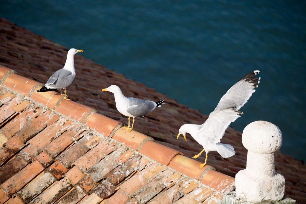 Naturfüchse können sich während der Fotoreise Kroatien auf Pirsch begeben und tierische Motive erbeuten.