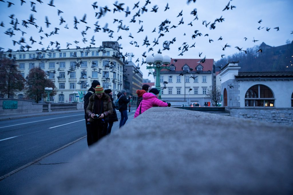 Frühe Morgenfüchse können mit uns gemeinsam auf der Fotoreise Ljubljana der Stadt beim Aufwachen zusehen.
