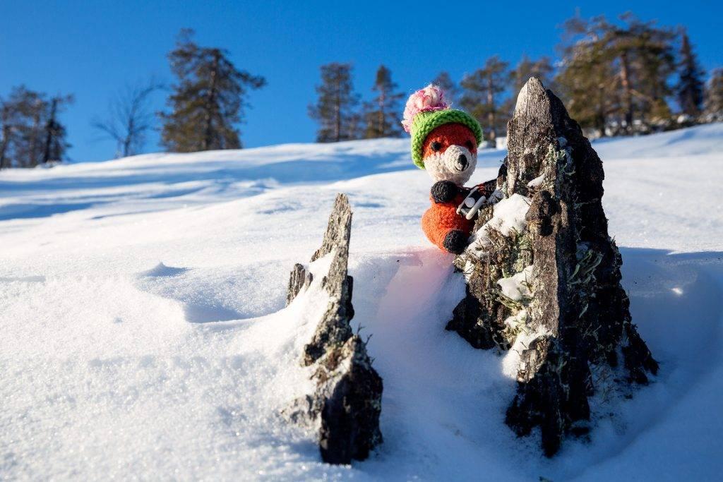 Auf unserer Fotoreise Finnland streifen wir gemeinsam gemütlich durch die Wälder auf der Pirsch nach der besten Perspektive.