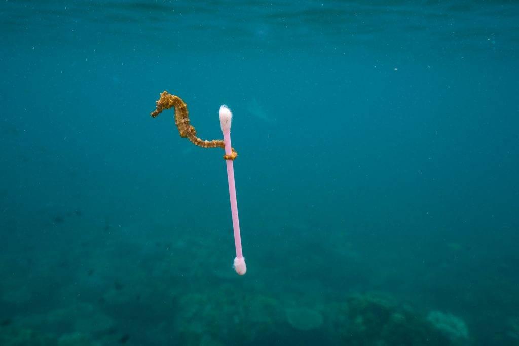"Umweltfotofestival ""horizonte zingst"" 2019 - Das Fotofestival in Zingst an der Ostsee"