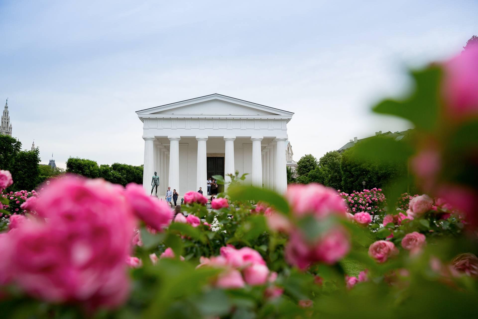 Der Theseustempel im Wiener Volksgarten mit üppig blühenden Rosensträuchern im Vordergrund.