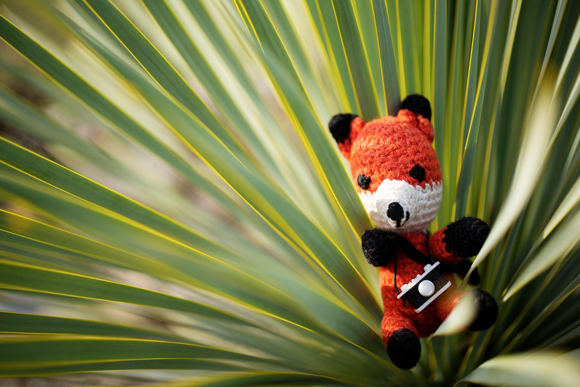 Komm mit uns gemeinsam beim Fotokurs Makro Fotografie im Botanischen Garten Berlin auf Pirsch nach exotischen Motiven. Tipps und Tricks um Pflanzen beeindruckend in Szene zu setzen.