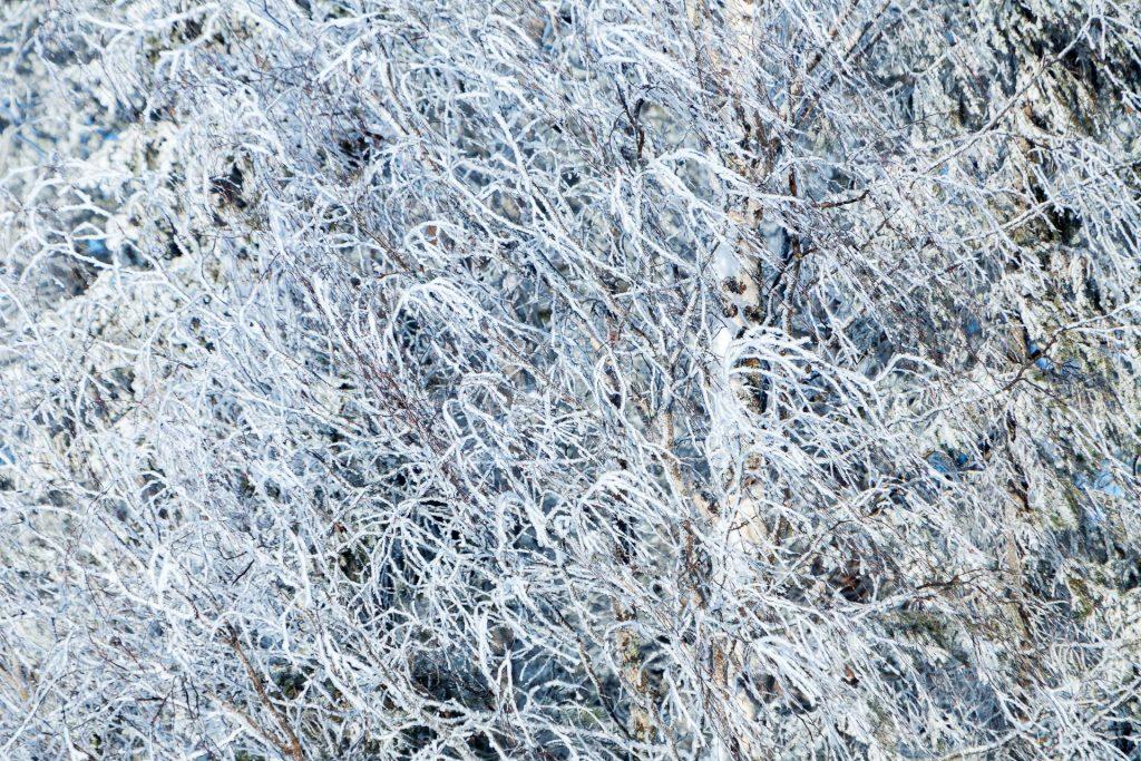Im winterlichen Wald finden sich vielfältige Motive für Details.