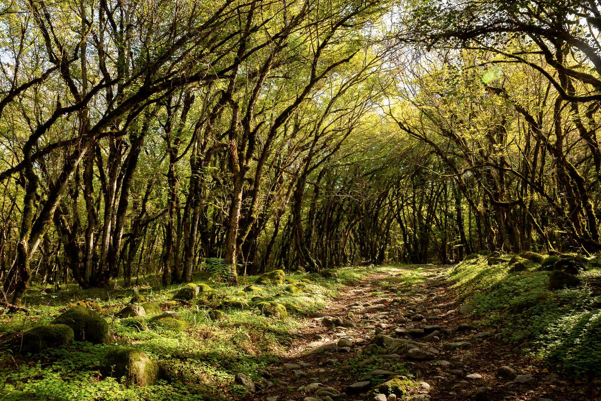 Die FOTOFÜCHSE Wunschorte. Durch den Urwald des Lagodekhi National Parks streifen und sich wie in einem verwunschenen Märchenwald fühlen.