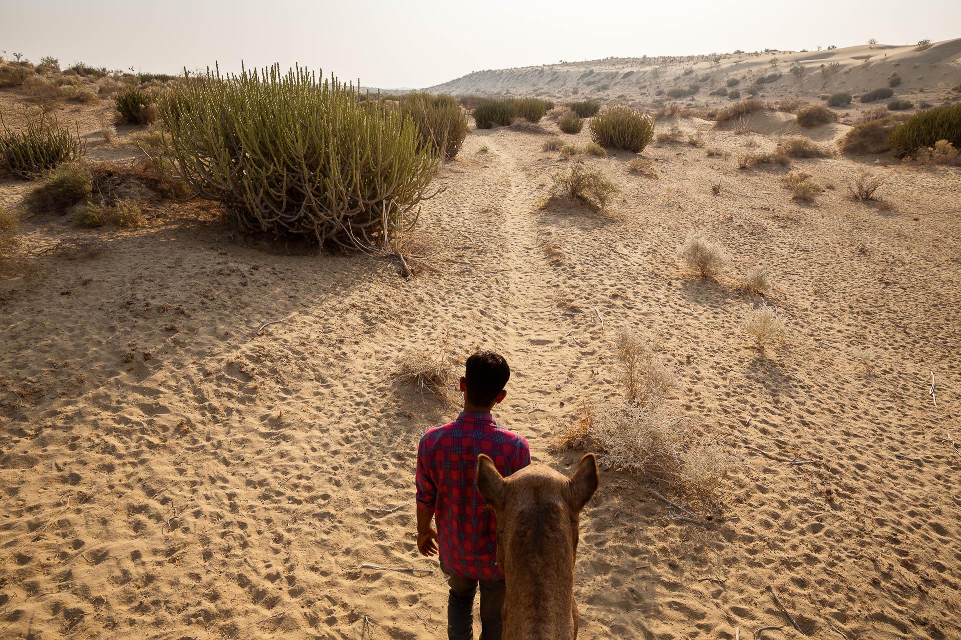 Die FOTOFÜCHSE Wunschorte. Am Rücken eines Kamels durch die Wüste Thar in Indien dem Sonnenuntergang entgegen reiten und sich auf das Abendessen in der Wüste freuen.