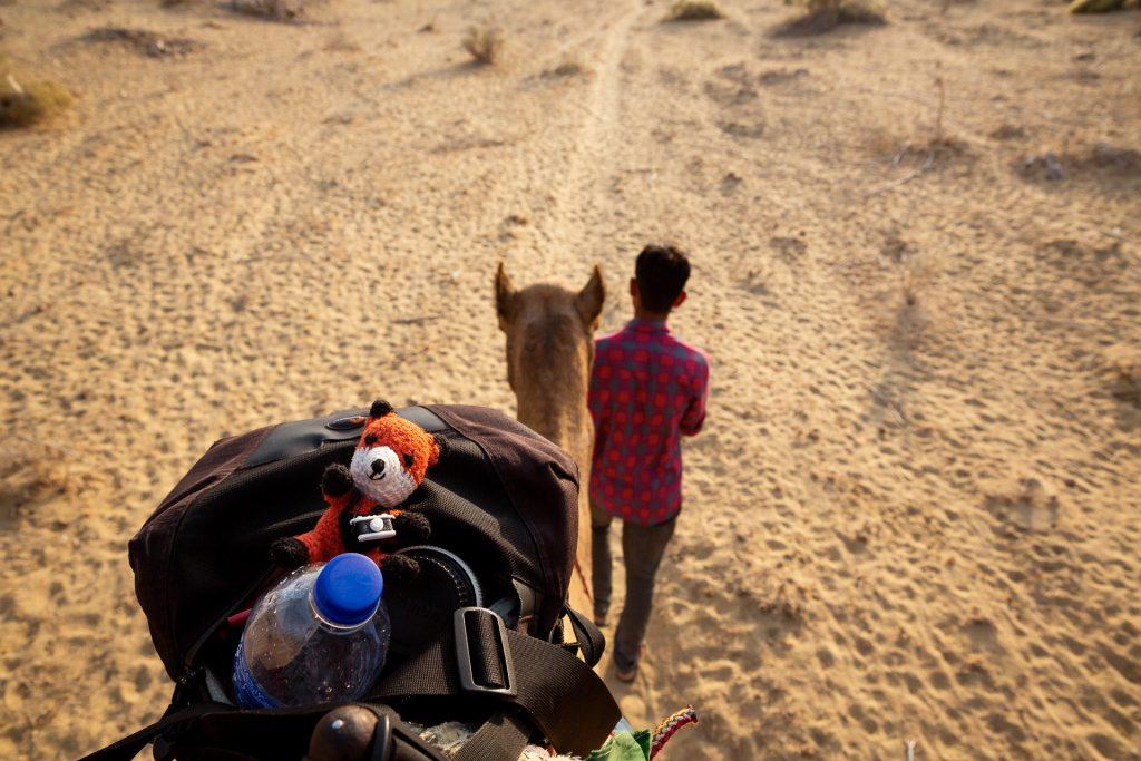 Die FOTOFÜCHSE Wunschorte. Finn macht es sich bei unseren Fotostreifzügen hoch am Kamel besonders gemütlich.