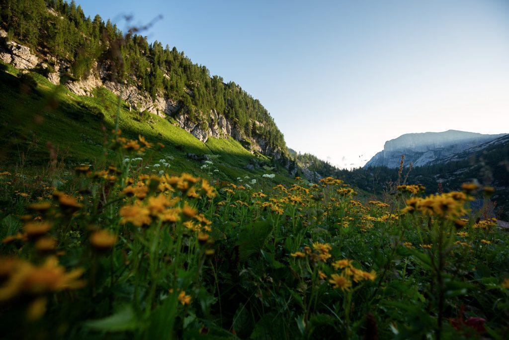 Die FOTOFÜCHSE Wunschorte. Eine Brettljause auf der Pühringerhütte nach einem Wander-Fotostreifzug in Österreich im Salzkammergut genießen. Und Fotofuchs Katharina erwarten.