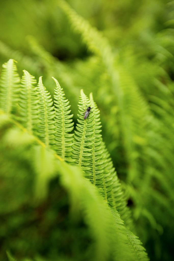 DIE FOTOFÜCHSE Foto Locations Salzkammergut. Kleine Tiere entdecken. Dann heißt es schnell sein, denn wer weiß schon, wie lang es sich ein Insekt auf einer Pflanze gemütlich macht.
