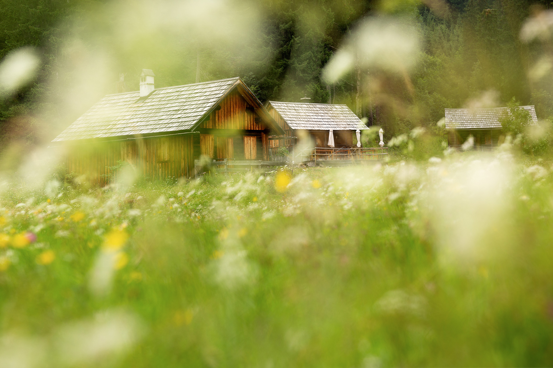 DIE FOTOFÜCHSE Foto Locations Salzkammergut. Die bewirtschaftete Hütte auf der Zimitzalm fotografiert durch das Blumenmeer auf der Almwiese.