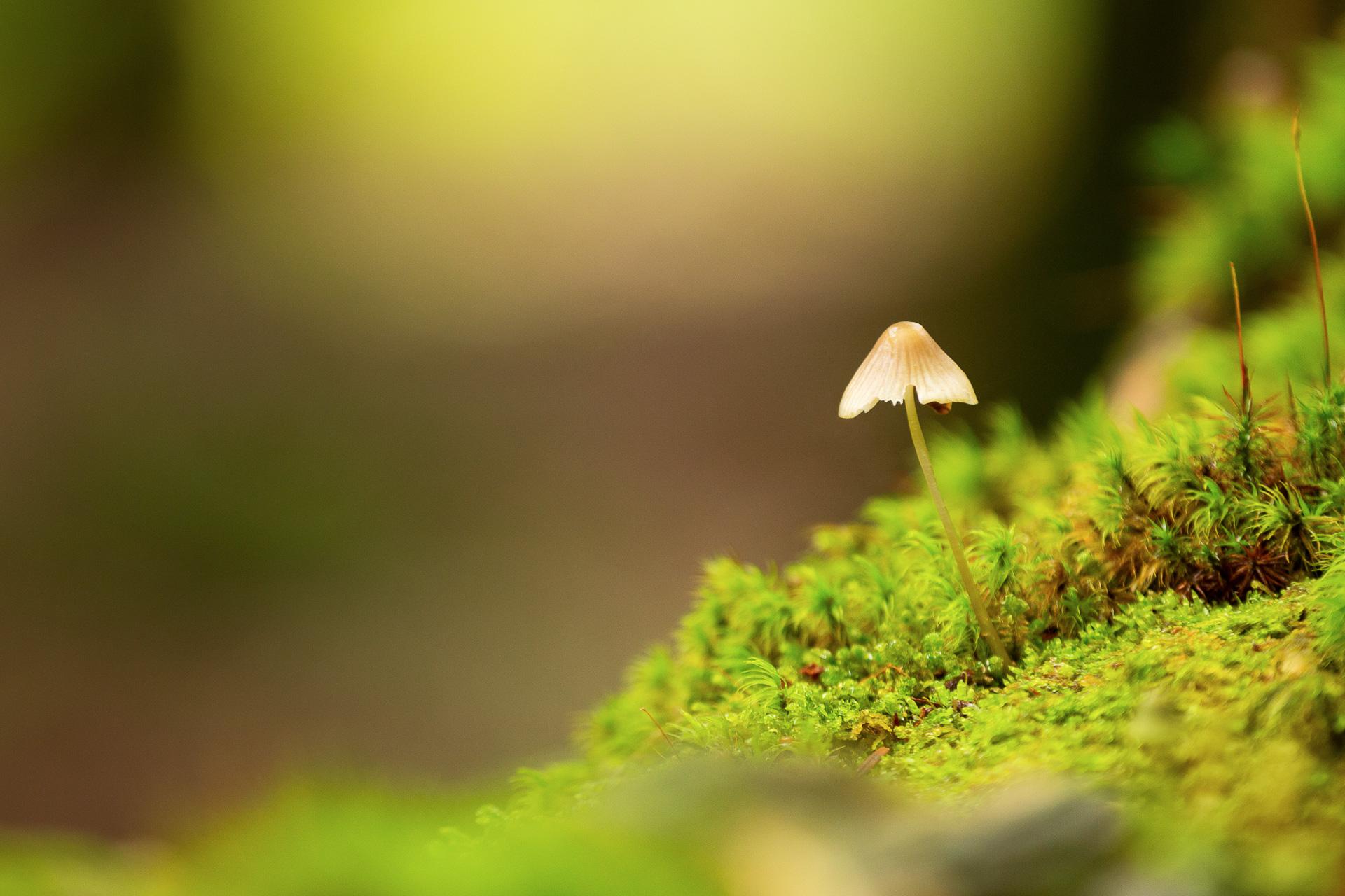 DIE FOTOFÜCHSE Foto Locations Salzkammergut. Mit dem Makroobjektiv im Wald auf der Pirsch nach Detailmotiven.