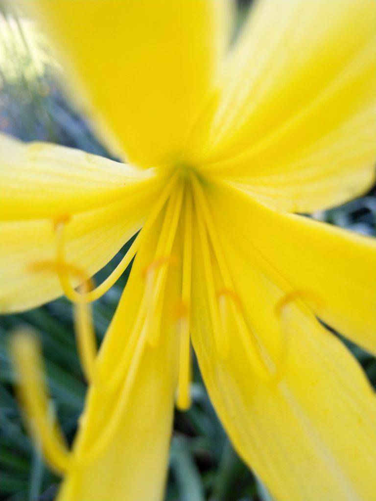 Je nach Jahreszeit wachsen im Park des Schloss Köpenick unterschiedliche Pflanzen, die auf dich und dein Makro-Objektiv warten.