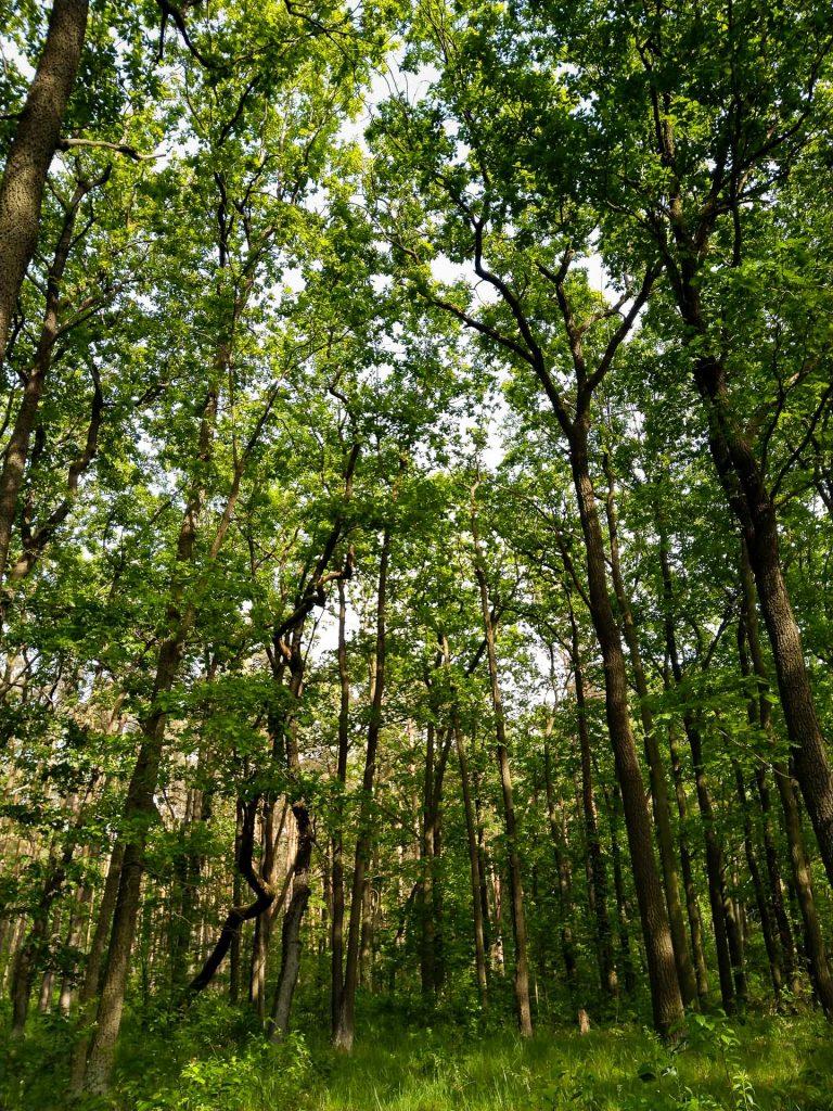 In den Wäldern rund um den Müggelsee gehen wir mit dir uns deiner Kamera oder Handy-Kamera auf Pirsch.
