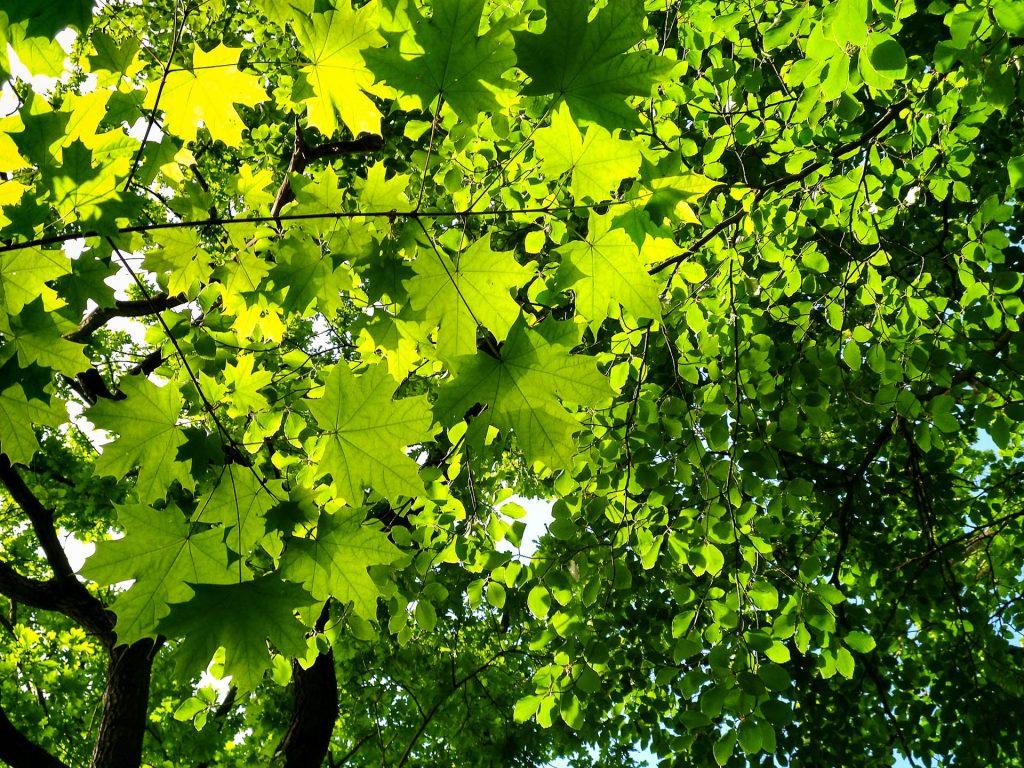 Bei unserem Fotokurs Naturfotografie Berlin im Grünen gehen wir auf Fotostreifzug durch die Wälder um den Müggelsee.