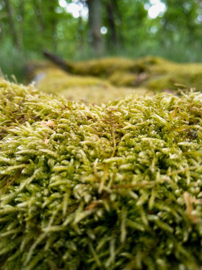 Lerne bei unserem Fotokurs Naturfotografie in der Weite und im Detail in Szene zu setzen.
