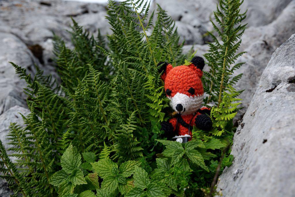 Finn zeigt dir viele Tipps und Tricks um deine Makro-Fotos in der Natur noch spannender zu gestalten.
