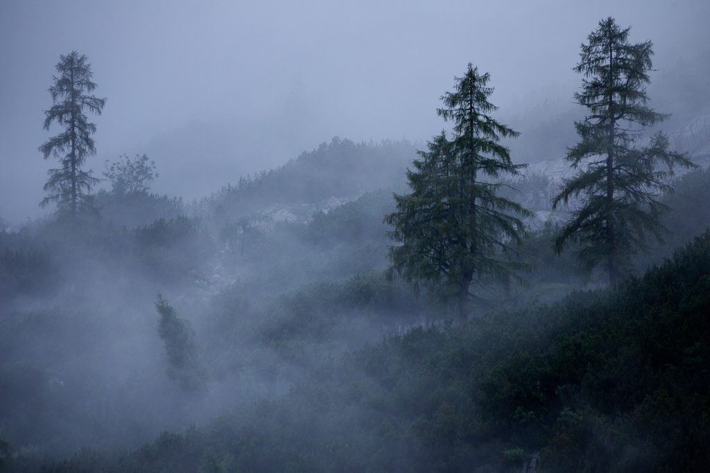 Grau- und Blautöne gewünscht. So macht Fotografieren in der Natur Freude.