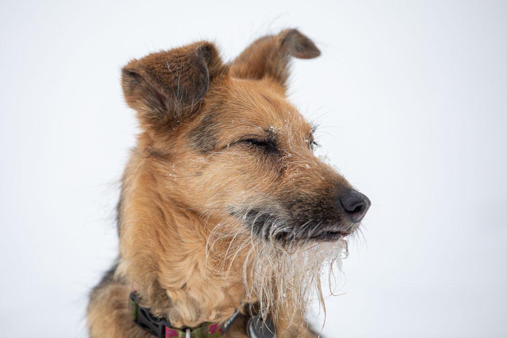 Im Theorieteil geben wir dir viele Tipps und Tricks um deine Hundefotos noch spannender zu gestalten.