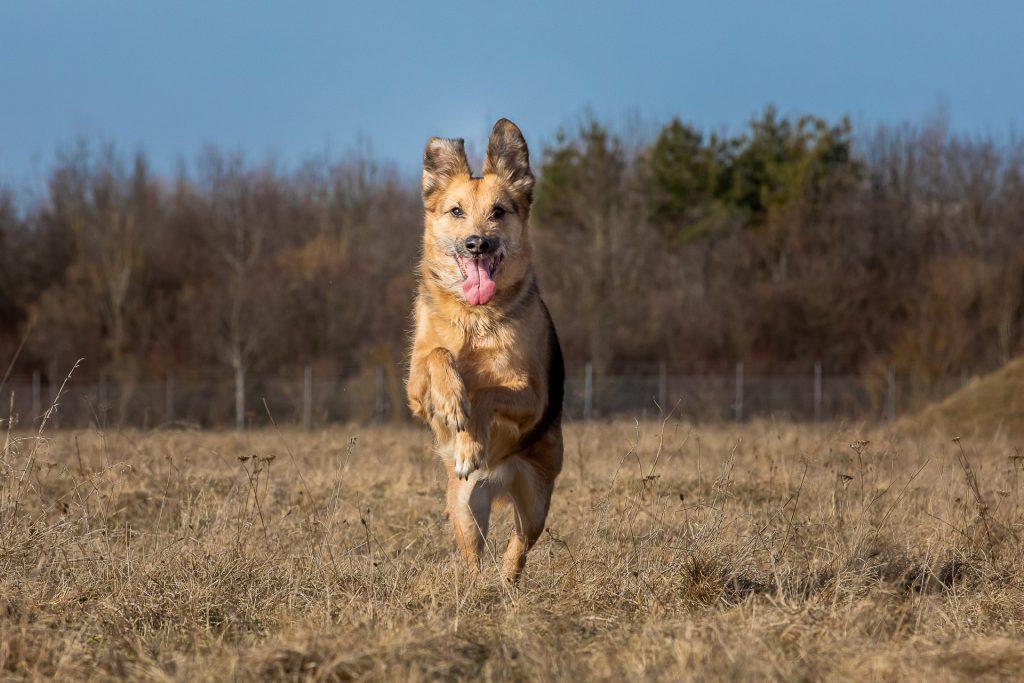 Bei unserem Fotokurs Hundefotografie in München lernst du den besten Freund des Menschen in Szene zu setzen.