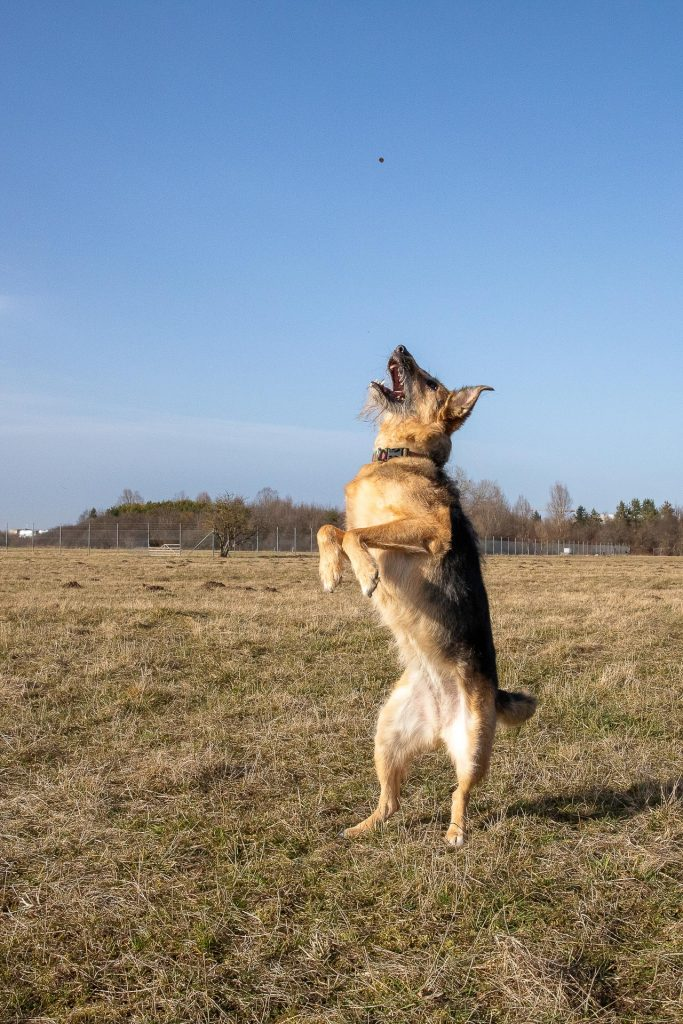 Begleitet einer professionellen Hundetrainerin fotografieren wir actionreiche Motive im Freien.