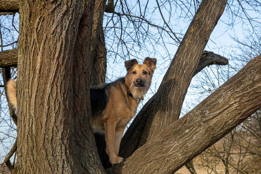 Wenn wir Glück haben wirft sich bei unserem Fotokurs sogar der seltene Baumhund in Pose.