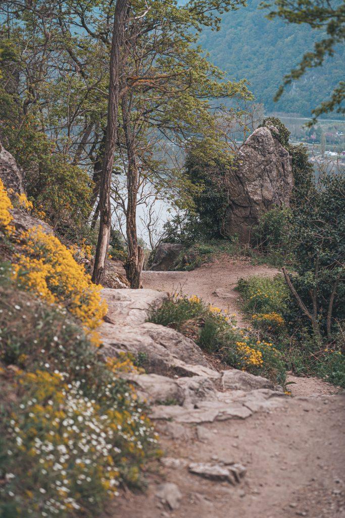 Die Wanderung hinauf zur Burgruine ist auch für wenig bis gar nicht geübte Fotofüchse geeignet.