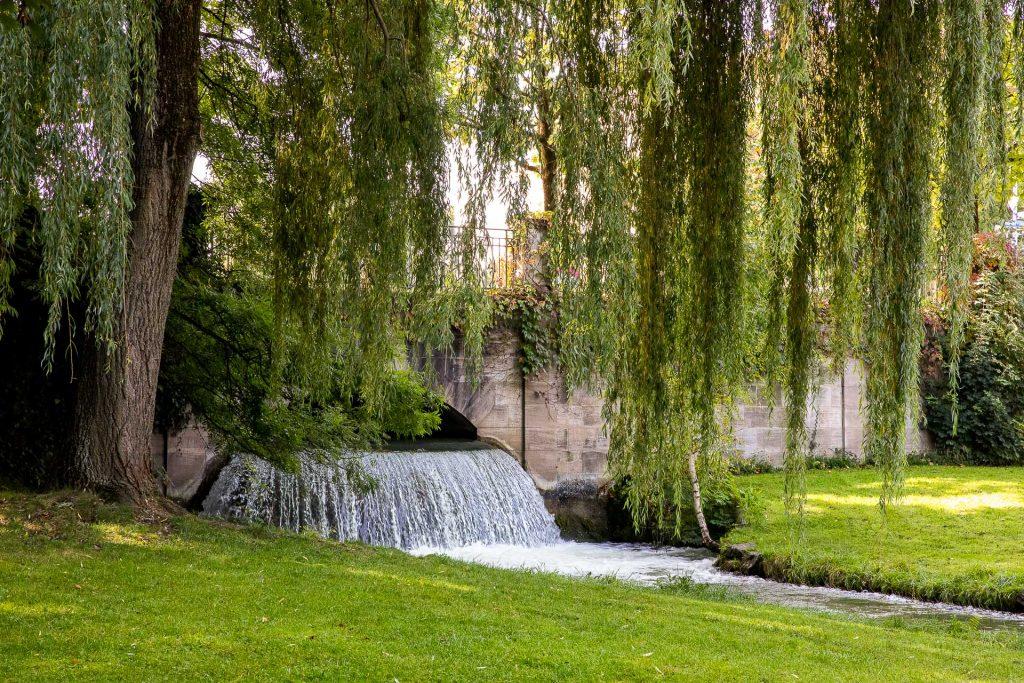 Je nach Jahreszeit präsentiert sich der englische Garten in satten Grüntönen...