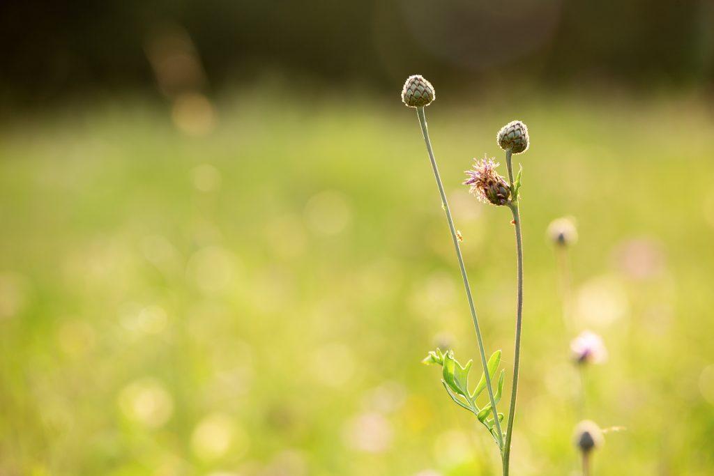 Komm mit uns auf beim Fotokurs München im Grünen auf einen gemütlichen Fotostreifzug durch den Englischen Garten.